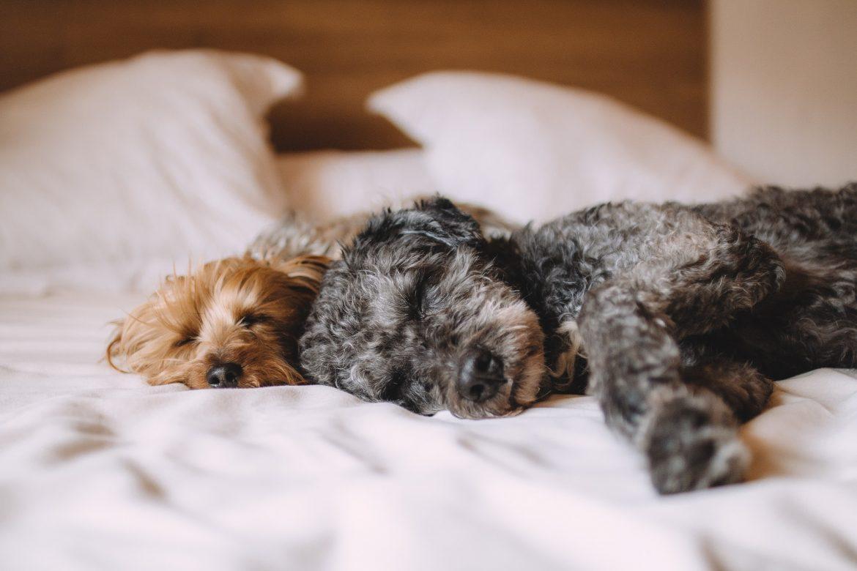 Las mujeres prefieren dormir con sus perros que con sus parejas